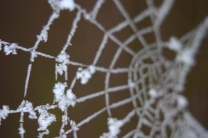 Ice Web by SuicideSeasonn