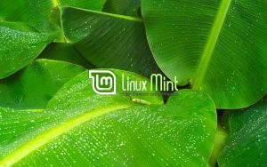 Wallpaper for Mint 15 by malvescardoso