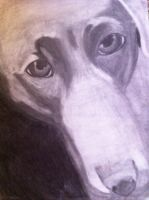 Dog close Up by bmbbaby4