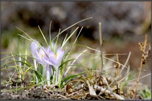 Spring Moments 11 by Clu-art