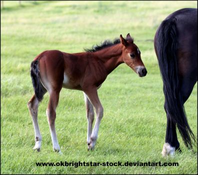 Friendly Mare Foal 9 by okbrightstar-stock