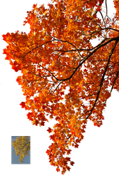 Autumn leaves 2 STOCK by AStoKo
