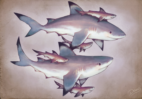 Blacktip Sharks Family by Astral-Requin