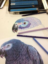 Colored Pencil WIP by DragonSmurf