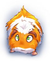 Little Guinea Pig by Fany001