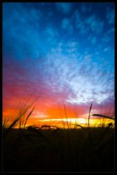 Cornfield sunset by moinerus
