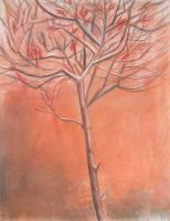 Leafless tree by philippeL