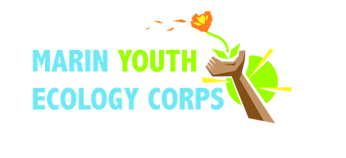 Marin Youth Ecology Corps Logo unused concept 1 by LovetheTrub