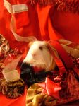 Holiday Guinea Pigs 7 by LadyTsunade