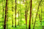 Bright green forest in spring with beautiful by ROGUE-RATTLESNAKE