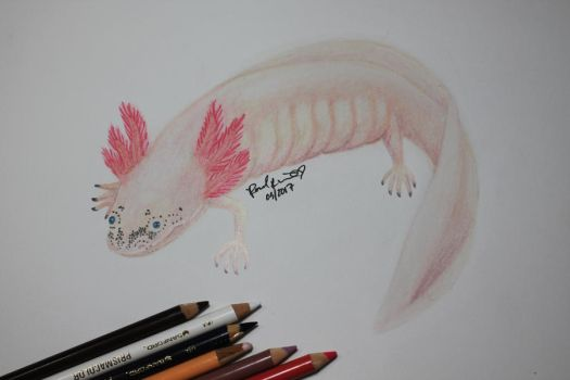 Daisy the Axolotl by beachgecko