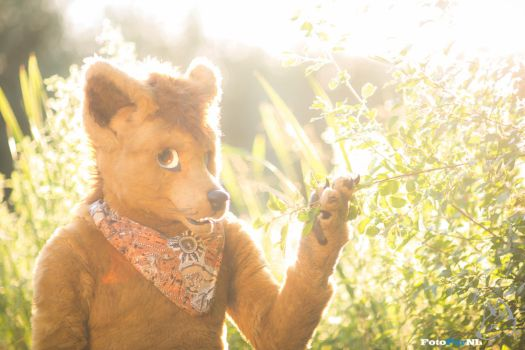 Glowing Thylacine by FotoFurNL