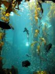 The Kelp Forest Exhibit by X5-442