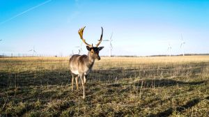 Deer on the Field 2 by Atroksia-Photography