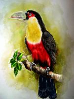 Green-billed Toucan (Ramphastos dicolorus) by Chimerum