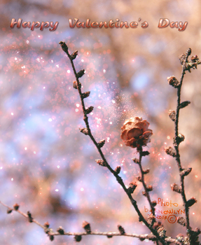 Happy Valentines Day Photo 2017 by Snowlyn