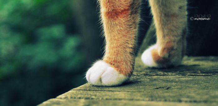 soft paws by lisarime