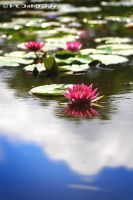 Lotus in the sky by WindyLife