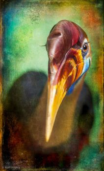 Finer Feathered Friends- Red knobbed Hornbill by ashapiro515