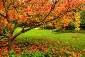 Autumn in Geelong by daniellepowell82