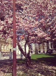 More about Spring by Manthur