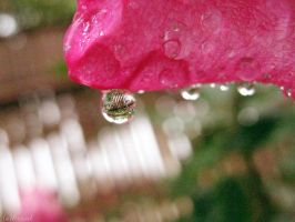 after rain. by Aricel