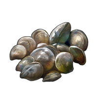 Clams by TokoTime