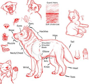 Wolf Anatomy and emotions favourites by BabywolfKiana on DeviantArt
