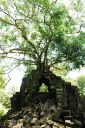 Nature Reclaims All, Beang Mealea, Cambodia by OwenHuwMorgan