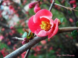 Pink flower by AnitaBright