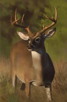 Deer Study 1 Day #36 by AngelGanev