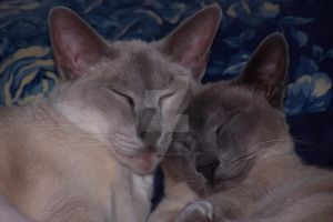 Close up of sleeping cats faces by fanfictionaxis