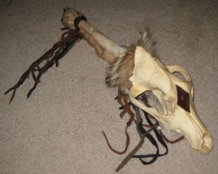 Wolf skull and fur rattle 3 by lupagreenwolf