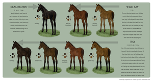 Equine Colour Guide :: Bay I by MistyofSunrise