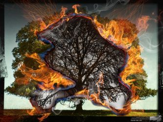 Burning Tree by Puttee