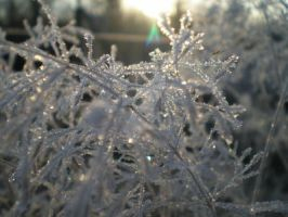 frost in the sun by MissManic7910