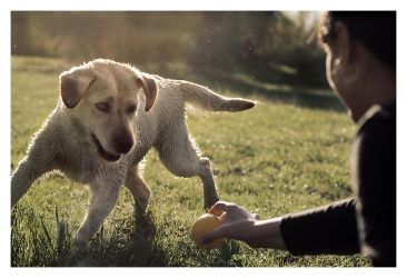 Gimme the ball by KateWalker