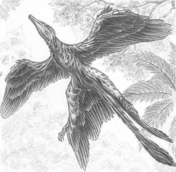 WIP - Flying Cryptovolans by aspidel