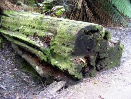 Fallen Log With Moss 08 by Gracies-Stock