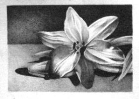 Lillies - ACEO 200 by Arthay