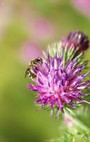 Bee by Ewig