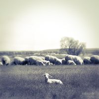 sheep, lamb by subart59