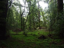 Red wood forest by Spiteful-Pie-Stock