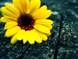 Yellow II by volltron