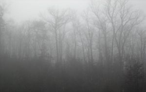Mist and Fog 1 by vacuumslayer