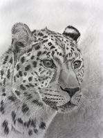 Leopard in graphite by Sarahharas07