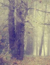 Misty Wood 1 by moonchild-lj-stock