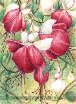 ACEO Pink Fuchsias by JoannaBromley