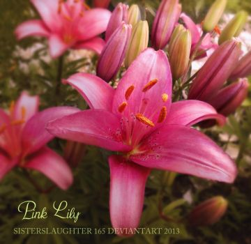 Pink Lily by Sisterslaughter165
