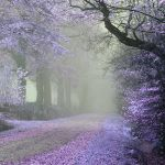 Path of tears and smiles by Oer-Wout